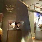 Manx Museum Foto