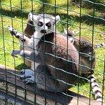 Photo de Bouillon Wildlife Park