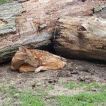 Wisconsin Deer Park Photo