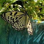 Callaway Resort & Gardens ภาพถ่าย