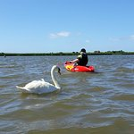 Kayaking in Christchurch harbour