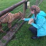 Animal Farm Adventure Park Photo