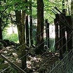 Bilde fra La Maison des Loups