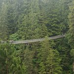 suspension bridge-I dare you to jump up and down while on the bridge