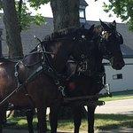 Bilde fra Kentucky Horse Park