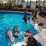 Dolphins were the most entertaining