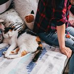 Relax with cats. Purr therapy is real.