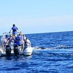 صورة فوتوغرافية لـ Whale Watch Cabo