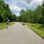 Fox Ridge State Park Foto