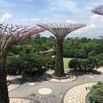 Φωτογραφία: Gardens by the Bay