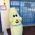Loved our visit to this Wacky Fun Banana Memorabilia Museum and Gift Shop
