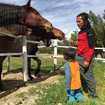 Close encounters with on-site horses.