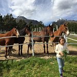 Close encounters with on-site horses