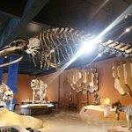 Museu de Ciências Naturais