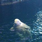 Фотография Shedd Aquarium