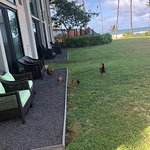 Bilde fra Hilton Garden Inn Kauai Wailua Bay