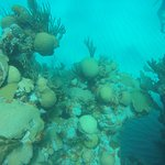 Reef galour