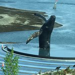 Humpback whale statue in Juneau on the way