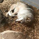 Foto de International Wolf Center