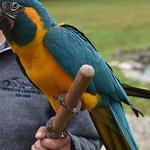 Parrot Paradise - Presentation