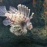 North Carolina Aquarium at Fort Fisher: T-rex