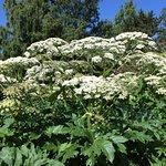 Botanical Gardens (Botanisk Hage og Museum) – fénykép