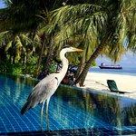 Bilde fra Vilamendhoo Island Resort & Spa