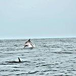 Bilde fra Sabino Boat Tours