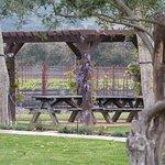 Melville Vineyards, Lompoc, California