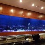 The massive fish tank