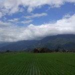 Spectacular paddy view with mountain backdrop
