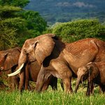 Vic Consult Tours & Safaris