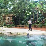 ภาพถ่ายของ สวนสัตว์สิงคโปร์