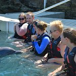 meeting dolphin