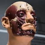 As part of the identification process, the skull of King Richard III was reconstructed.
