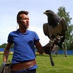 Aigle bleu du Chili