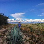 Discover the different mezcal making agave of the region, and partake in the making process.