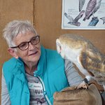 In the classroom with the barn owl