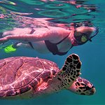 I met a new turtle friend!