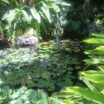 San Diego Botanic Garden SDBGGarden.org