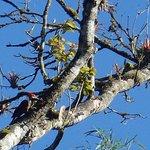 Bio Hostal Mindo Cloud Forest-billede