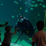 Shark tank diver talk