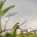 Photo Taken on Bird Watching Tour