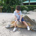 My son playing with the turtles