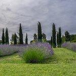 Bilde fra Les Jardins du Coq