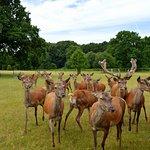 Deer Safari