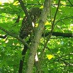 Foto de Ijams Nature Center