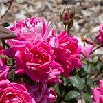 The colours of Domaine Carneros, Napa, California
