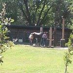 Bosque Circle Ranch의 사진