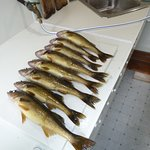 Morning Catch / Fris fry was delicious.